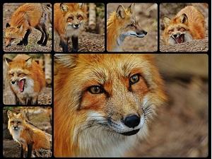 Hacer un collage de fotos online